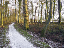 Mersehead RSPB reserve, Dumfries Royalty Free Stock Photography