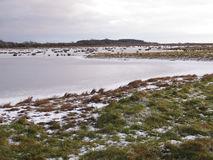 Mersehead RSPB reserve, Dumfries Royalty Free Stock Images