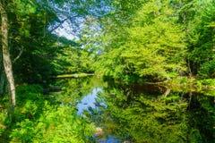 Mersey-Fluss, in Nationalpark Kejimkujik lizenzfreies stockfoto