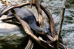 Mertenss vattenbildskärm royaltyfri fotografi