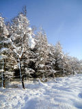Merveille de l'hiver Photos libres de droits