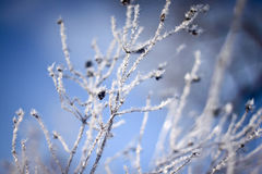 Merveille de l'hiver Image libre de droits