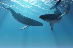 Merveilles de baleine Photos libres de droits