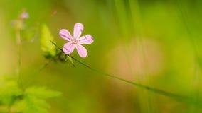 Merveilles de nature Image libre de droits