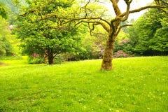 Merveilleux, jardin 2 de source Photo stock