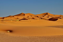 Merzouga desert in Morocco Royalty Free Stock Images