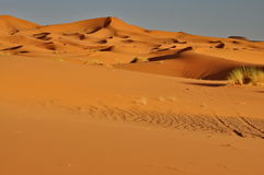 Merzouga desert in Morocco Stock Images