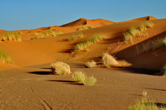 Merzouga desert in Morocco Stock Photos