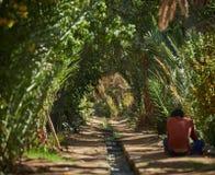 Merzouga, Marocco - 4 dicembre 2018: tunnel della palma con una corrente nel mezzo, in un'oasi del Marocco fotografie stock libere da diritti