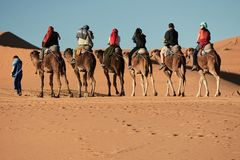 Merzouga Marocko - December 05, 2018: kamelutfärd i merzougaöknen royaltyfri foto