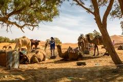 Merzouga Marocko - November 03, 2016: Vila på vägen igenom Royaltyfri Fotografi