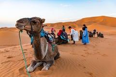 MERZOUGA, MAROKKO - 2. August: Ein männlicher Führer des Berber im Trachtenkleid ein junges männliches Kamel im Erg Chebbi ausbil stockfoto