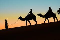 Merzouga, Marokko - 3. Dezember 2018: Hintergrundbeleuchtungskamelsonnenuntergang lizenzfreies stockbild