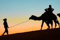 Merzouga, Marrocos - 3 de dezembro de 2018: por do sol dos camelos do luminoso imagens de stock royalty free