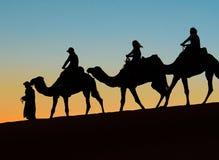 Merzouga, Marruecos - 3 de diciembre de 2018: puesta del sol de los camellos del contraluz fotografía de archivo libre de regalías