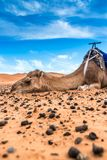 Merzouga in the Sahara Desert in Morocco. Africa Royalty Free Stock Images