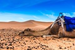 Merzouga in the Sahara Desert in Morocco. Africa Royalty Free Stock Photo