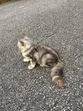 Mes chats Image libre de droits