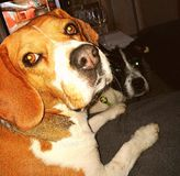 Mes chiens Photographie stock