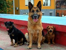 Mes chiens Images stock