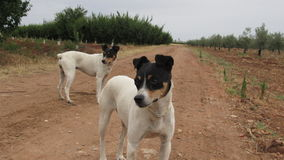 Mes chiens 1 Photo stock