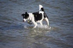 Mes chiens appréciant un bain image libre de droits