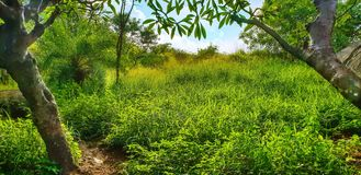 Mes jardins rêveurs de Lalbagh du monde photos stock