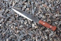 Mes op shells Stock Fotografie