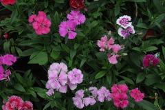 Mesa colorida de las flores, fondo móvil del papel pintado Fotos de archivo