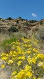 MESA con la toppa gialla del fiore fotografie stock