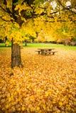 Mesa de picnic Autumn Nature Season Leaves Falling de la zona de descanso Fotos de archivo