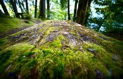 Mesa de picnic cubierta de musgo Fotografía de archivo libre de regalías