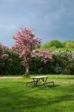 Mesa de picnic en el parque Imagenes de archivo