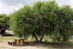 Mesa de picnic de madera en parque Fotos de archivo