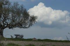 Mesa de picnic y banco en el árbol de abedul de la primavera y el claro venerables en el día soleado, montaña de Plana Fotos de archivo