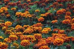 Mesa, papel pintado móvil de las flores Imagenes de archivo