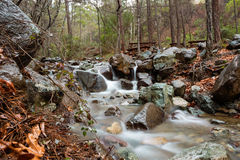 Mesa Potamos Creek in Cyprus Forest Royalty Free Stock Images