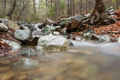 Mesa Potamos Creek in Cyprus Forest Royalty Free Stock Image