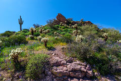 Mesa Trail Superstition Mountain Wilderness noir Arizona Images stock