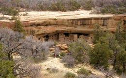 房子mesa云杉的结构树verde 库存照片
