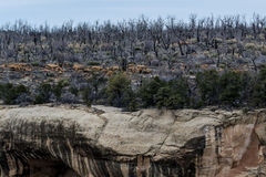 Mesa verde nationaal park - klippenwoning in lan van de woestijnberg Royalty-vrije Stock Fotografie