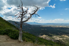 Mesa Verde National Park i Colorado Royaltyfri Fotografi