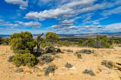 Mesa View av McInnis kanjoner royaltyfri fotografi