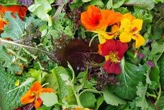 Mesclun与可食的花的沙拉绿色 图库摄影