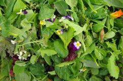 Mesclun与可食的花的沙拉绿色 免版税库存照片