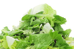 Mesclun, a mix of assorted salad leaves Stock Photos