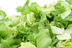 Mesclun, a mix of assorted salad leaves Royalty Free Stock Images