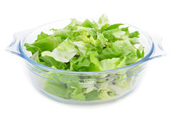Mesclun, a mix of assorted salad leaves Royalty Free Stock Photo