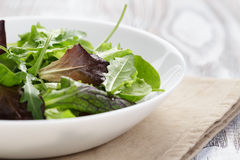 Mesclun mix salad in white bowl Stock Image