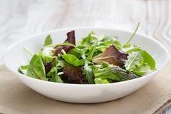 Mesclun mix salad in white bowl Royalty Free Stock Photo